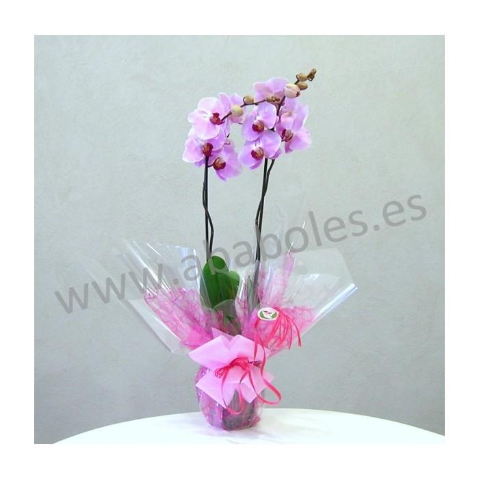 Planta de Orquídea