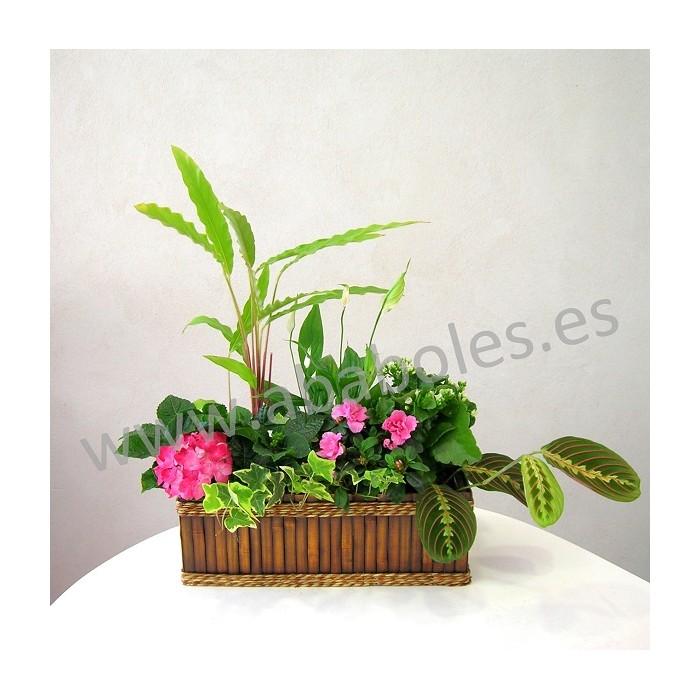 Jardinera de Plantas