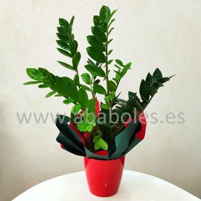 Planta de Zamioculca